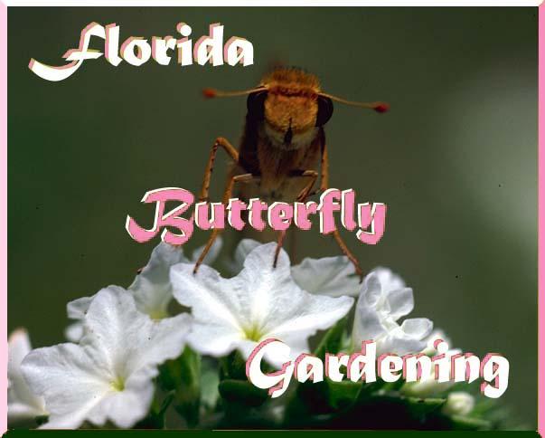 Florida Butterfly Gardening